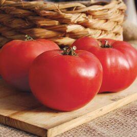 Seedling – Tomato, Rose de Berne