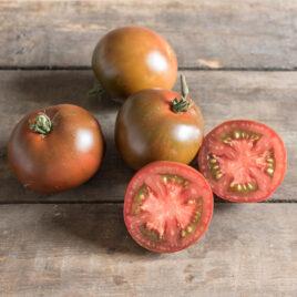 Seedling, Tomato, Black Prince