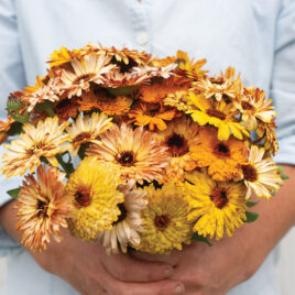 Seedling, Flower, Flashback Calendula