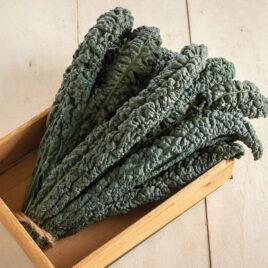 Seedling, Kale, Lacinato