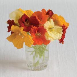 Seedling – Flower, Nasturtium