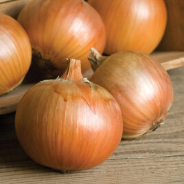 Seedling, Onion, Patterson 4-PACK