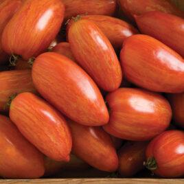 Seedling, Tomato, Speckled Roman