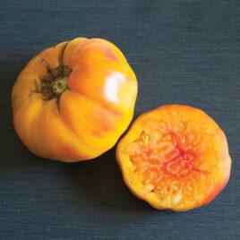 Seedling – Tomato, Striped German
