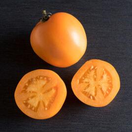 Seedling, Tomato, Valencia
