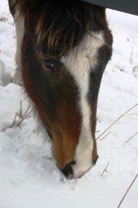 Eating snow doesn't provide enough water for your horse