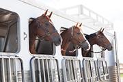 Horse image Vaccine Merck sept 16