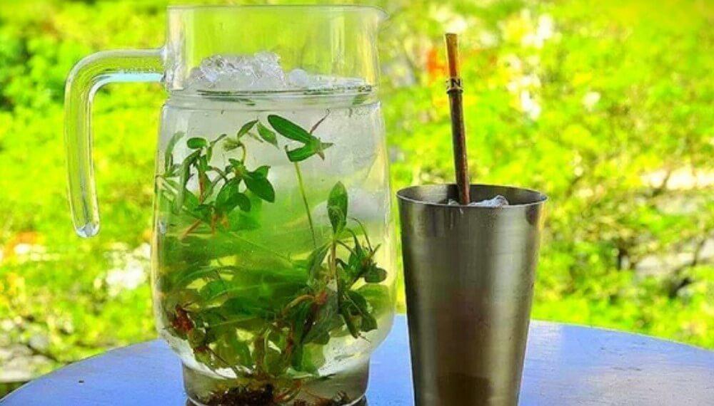 El Tereré, una bebida fría que se toma al calor de la amistad