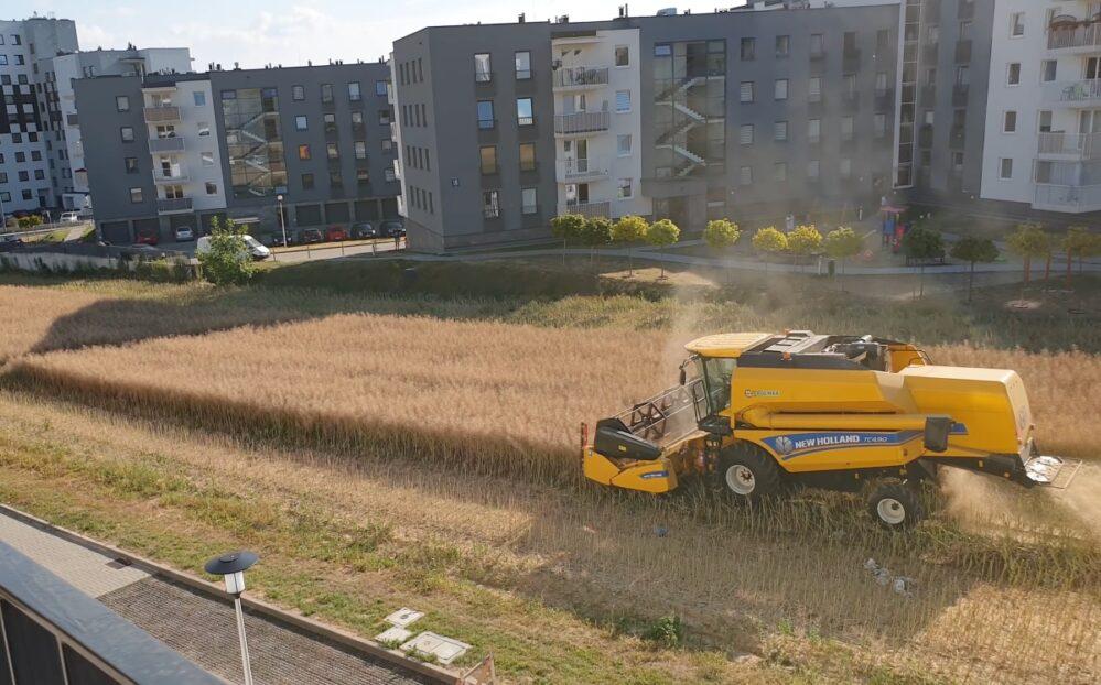 Viral: No cedió y ahora campesino cosecha entre torres de departamentos