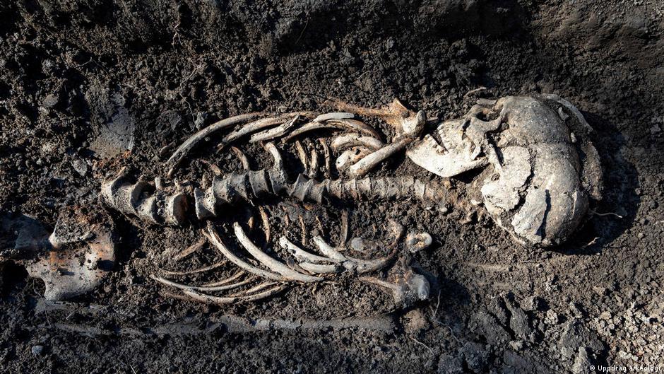 En Suecia descubren bebés vikingos en un entierro de aspecto cristiano