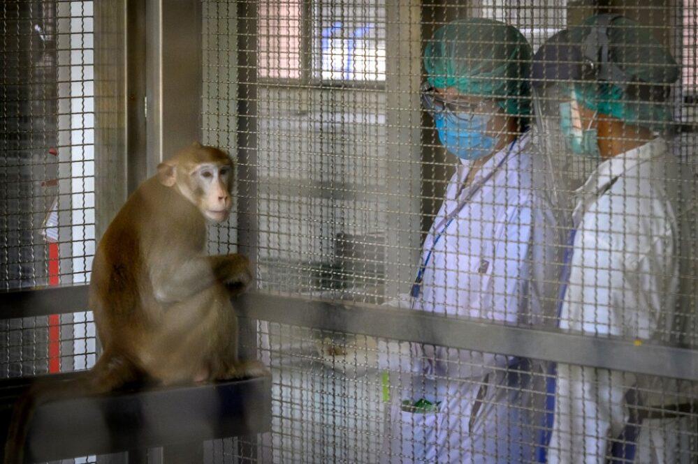 Registran en China primer muerte por nuevo virus del mono B