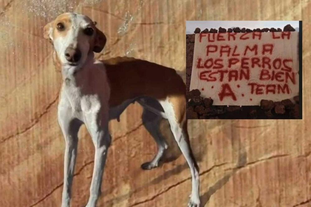 En España investigará policía el rescate de perros cercados por lava del volcán La Palma