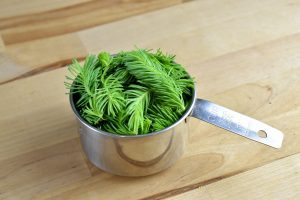 cup of spruce tips