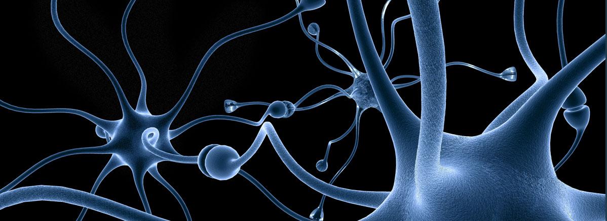 Neuron & Axon Slider