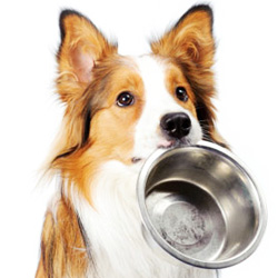 dog asking for food with bowl