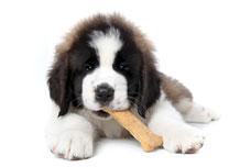 Seven Pet Food Ingredients to Avoid