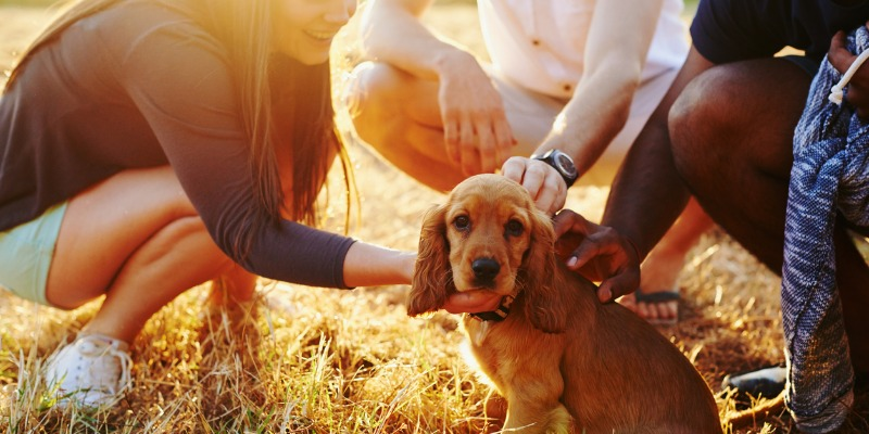 socializing puppy with humans