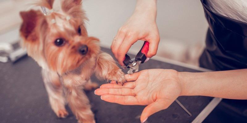 cutting dog's nails
