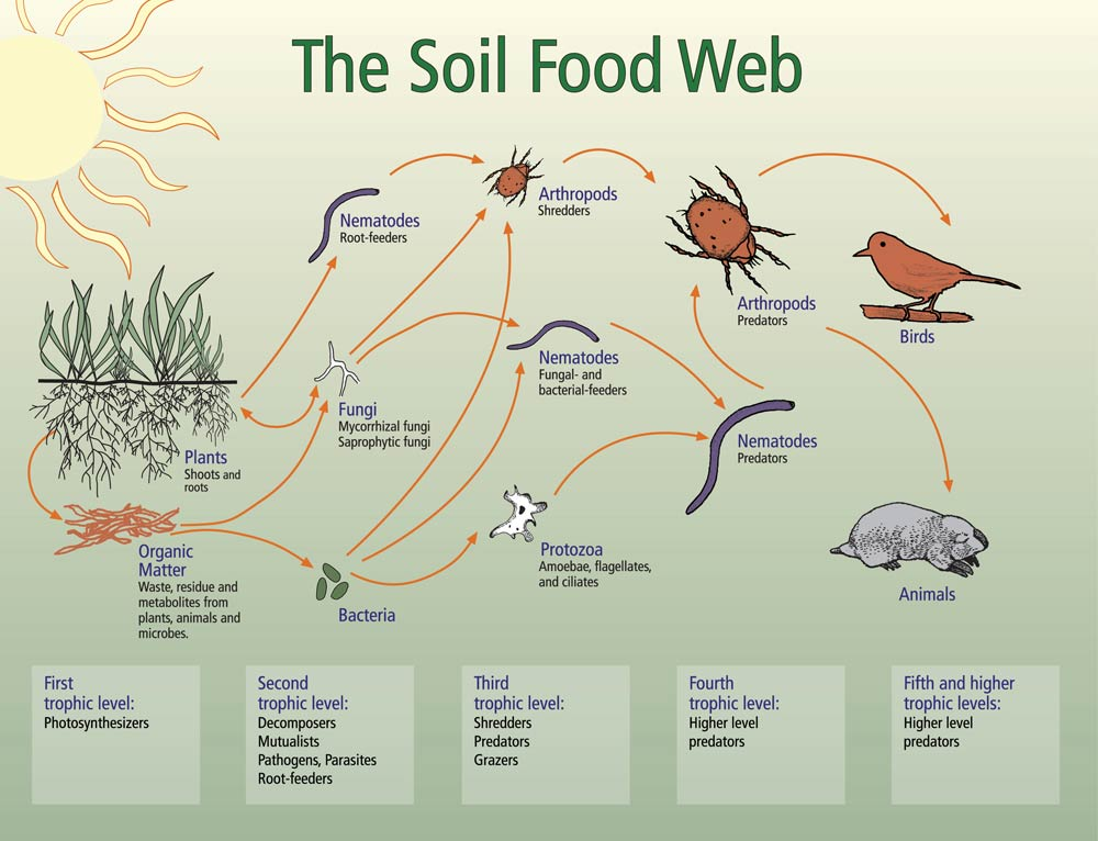 Living Organisms and Dead Material in Soil Image: USDA