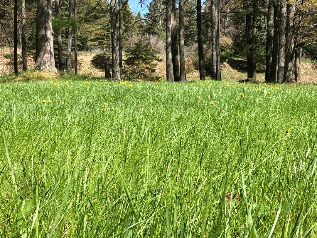 Sandy Loam Soil