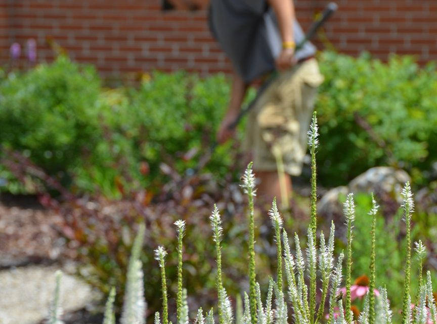 Outdoor Spaces: Hiring a professional, part III — Landscape contractors and arborists