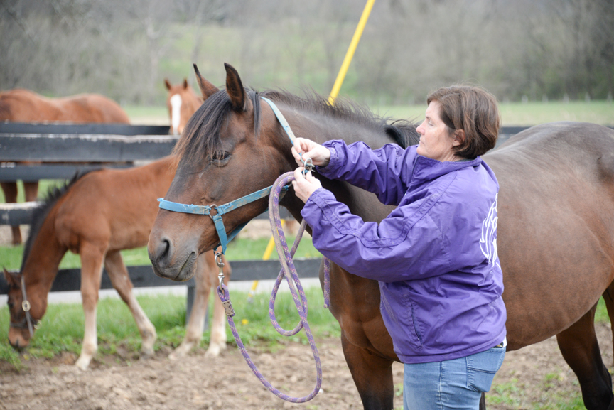 A lesson in training: 'Take care of the horse and the horse will take care of you'