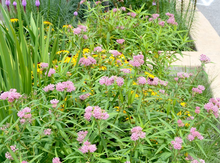Six must-have host plants to attract butterflies