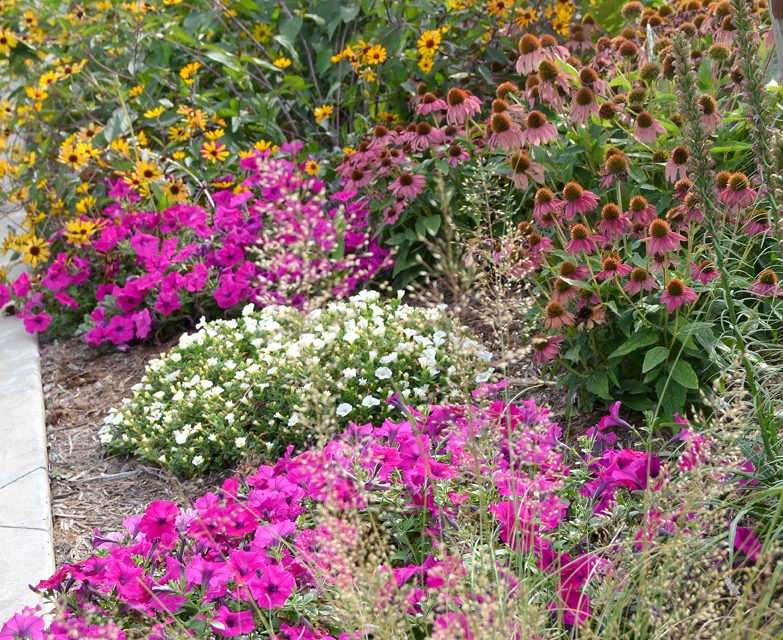 Create a summery, tropical garden with hardy natives