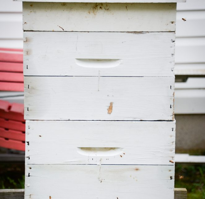 Area beekeepers wax nostalgic on bees, beekeeping, honey and the honeycombs that house them