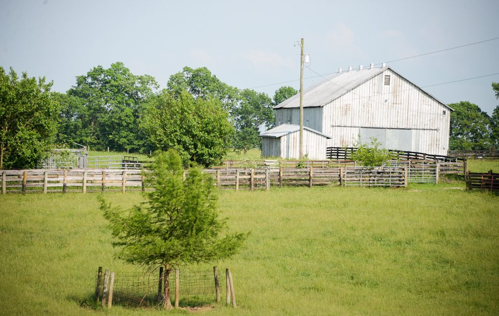 Life on Woodlake Farm: Hockensmith family continuing to work the land
