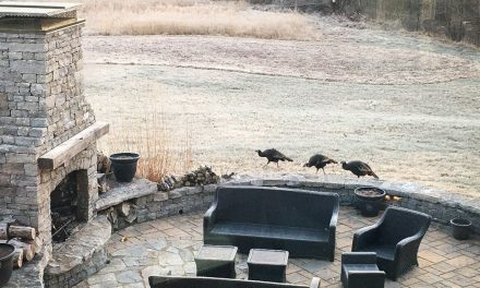 5 steps to attract wild turkeys to your yard