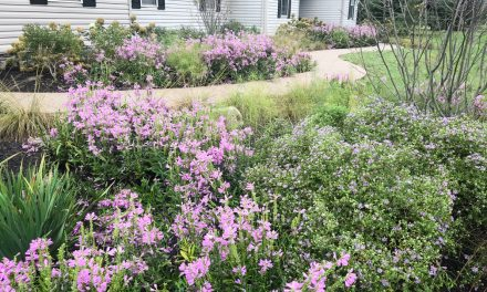Perennial native naturalizers make for great groundcover
