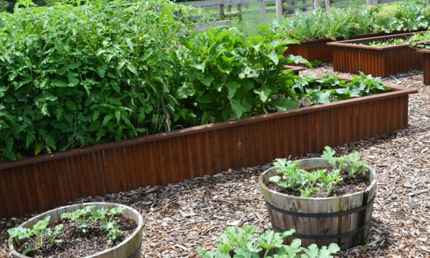 Five tips for raised planter beds