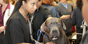 Tuskegee University veterinary students examine a dog.
