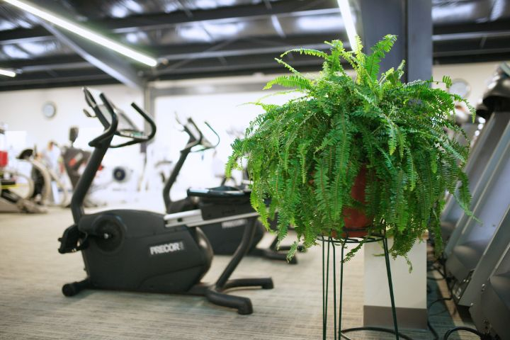 Fresh green ferns bathed in natural sunlight with Precor recumbents in background and plenty of space and no crowds