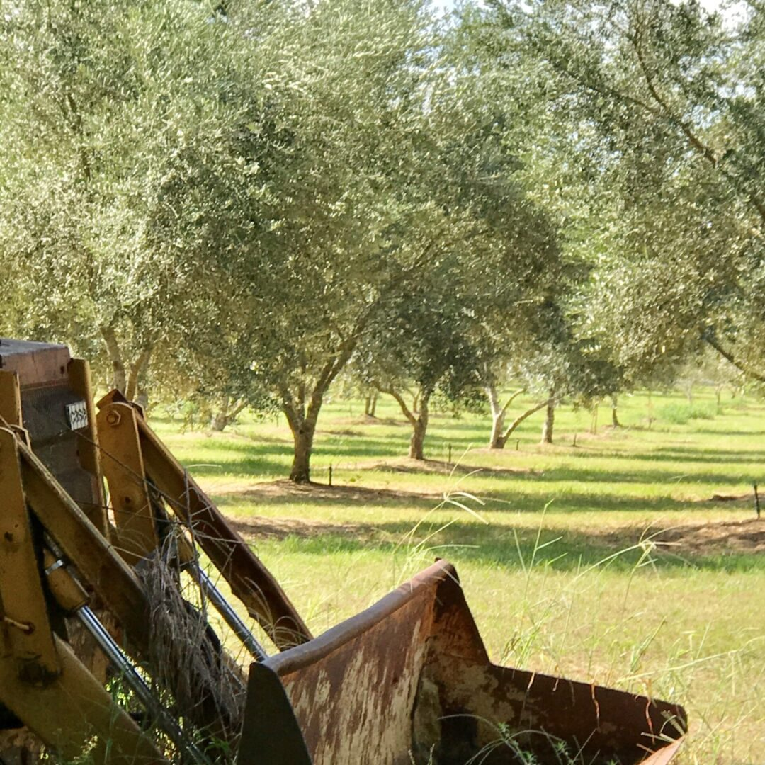 tractor and orchard