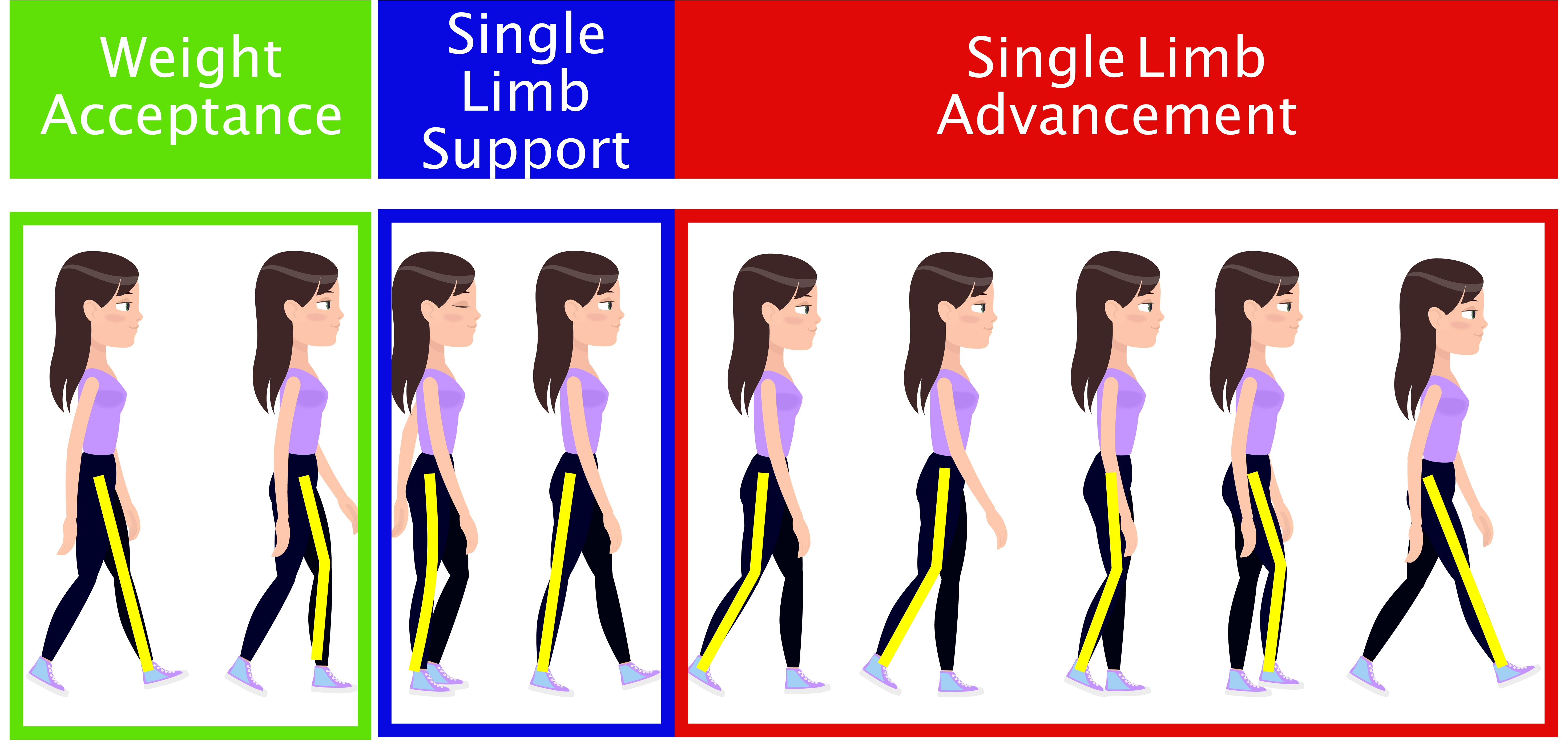 picture of stages of walking