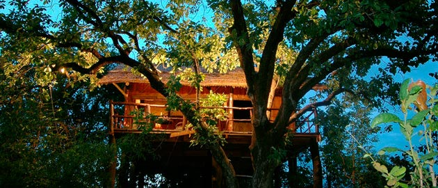 7 Tree Houses In India That Are So Cool You'll Want To Stay Forever