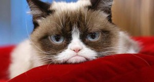 15 Things You Didn't Know About Grumpy Cat