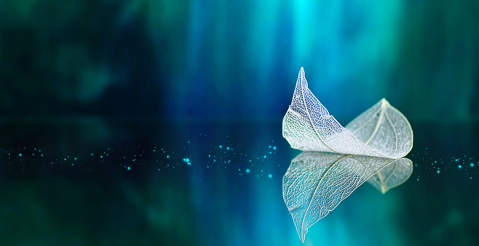 Banner white leaf cosmic waters