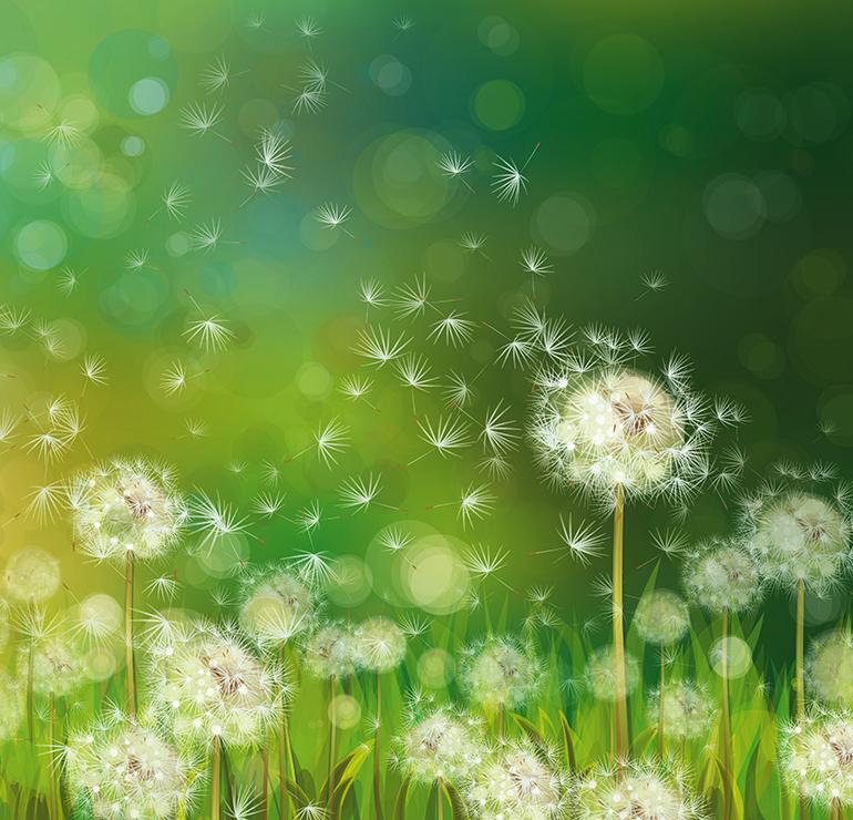 Dandelion release
