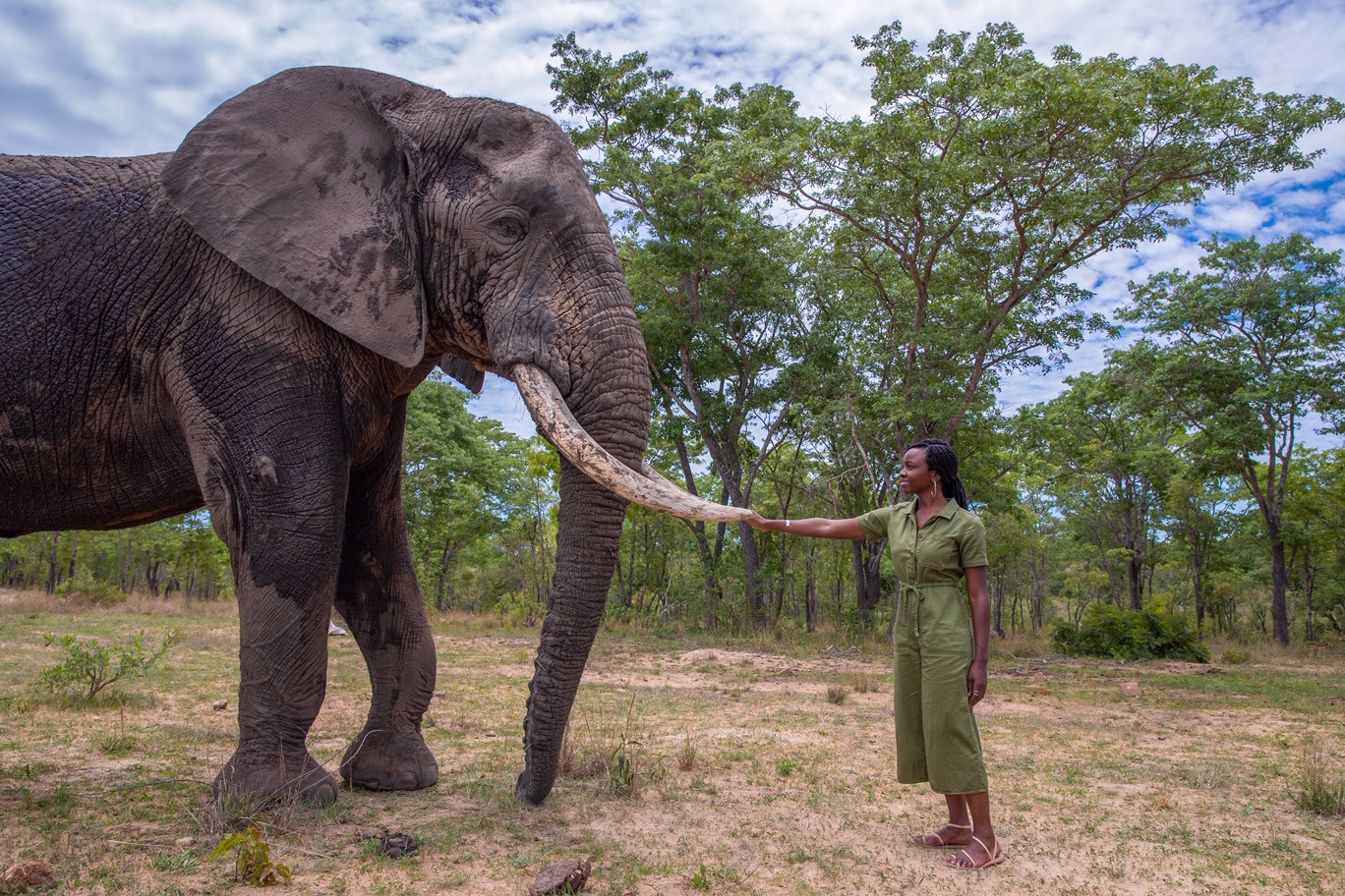 WildAid Featured on People.com for Anti-Poaching Campaign Partnership with Black Panther Star Danai Gurira