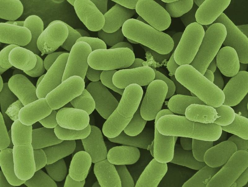 Probiotics- Friendly Bacteria