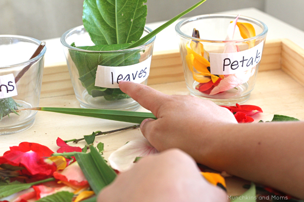 parts=of-a-flower-sorting-2