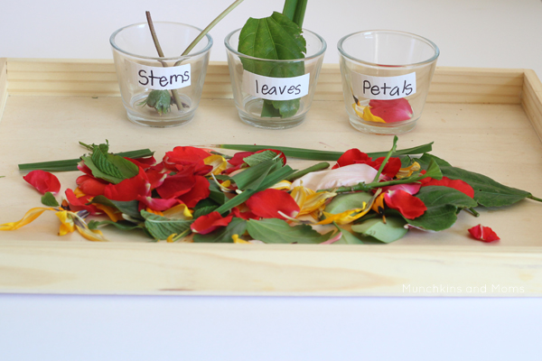 sorting-parts-of-a-flower-3
