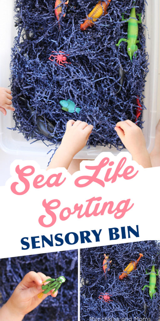 This sea life sensory bin takes a minute to put together but occupies little hands for so long!  Great for an ocean preschool theme!