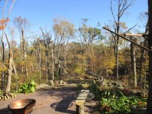 Backyard Woodland After Derecho