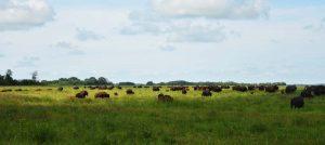 Beldon Bison Ranch