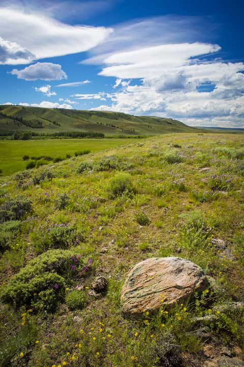Sustainability of Bison Ranching