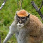 nature_monkey